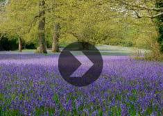 Spring Gardens in Cornwall: Video